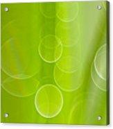 Dewdrops Acrylic Print by Silke Magino