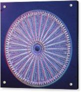 Diatom - Arachnoidiscus Ehrenberi Acrylic Print by Eric V. Grave