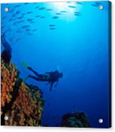 Diving Scene Acrylic Print by Ed Robinson - Printscapes