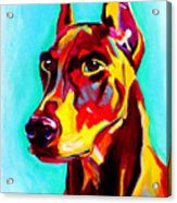 Doberman - Prince Acrylic Print by Alicia VanNoy Call