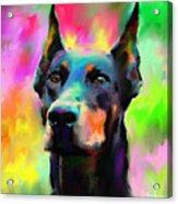Doberman Pincher Dog Portrait Acrylic Print by Svetlana Novikova