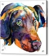 Doberman Watercolor Acrylic Print by Christy  Freeman