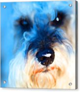 Dog 2 . Photo Artwork Acrylic Print by Wingsdomain Art and Photography