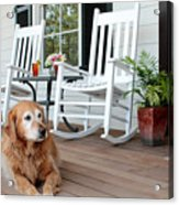 Dog Days Of Summer Acrylic Print by Toni Hopper