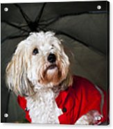 Dog Under Umbrella Acrylic Print by Elena Elisseeva
