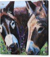 Donkey Tonk Acrylic Print by Billie Colson