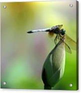 Dragonfly In Wonderland Acrylic Print by Sabrina L Ryan
