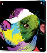 Dripful Pitbull Acrylic Print by Dean Russo