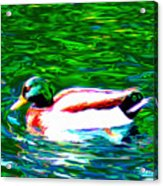 Duck Acrylic Print by Everett White