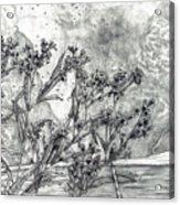 Dunbar Cave Clarksville Tn Acrylic Print by Joy Neasley