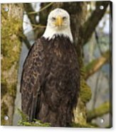 Eagle Eyes Acrylic Print by Angie Vogel