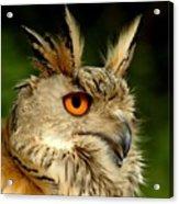 Eagle Owl Acrylic Print by Jacky Gerritsen
