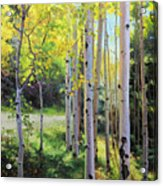 Early Autumn Aspen Acrylic Print by Gary Kim