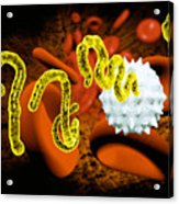 Ebola Virus Acrylic Print by Victor Habbick Visions and SPL and Photo Researchers
