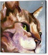 Egyptian Mau Princess Acrylic Print by Susan A Becker