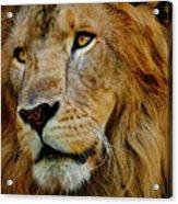 El Rey Acrylic Print by Skip Hunt