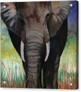 Elephant Acrylic Print by Anthony Burks Sr