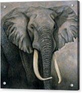 Elephant Acrylic Print by Lawrence Supino