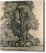 Elm Trees In Old Hall Park Acrylic Print by John Constable
