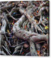 Entanglement Acrylic Print by Donna Blackhall