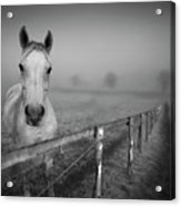 Equine Fog Acrylic Print by Taken with passion