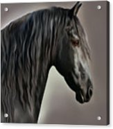 Equus Acrylic Print by Corey Ford