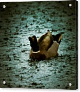 Escaping The Rain Acrylic Print by Loriental Photography
