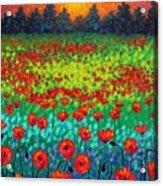 Evening Poppies Acrylic Print by John  Nolan