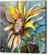 Evening Sun Flower Acrylic Print by Mindy Newman