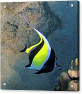 Exotic Reef Fish  Acrylic Print by Bette Phelan