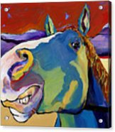 Eye To Eye Acrylic Print by Pat Saunders-White