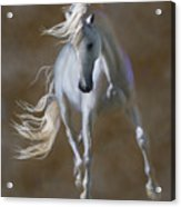 Fabuloso Acrylic Print by Barbara Hymer