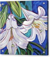 Faith Lily One Acrylic Print by Dawn Thrasher
