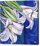 Faith Lily Two Acrylic Print by Dawn Thrasher