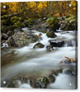 Fall Surge Acrylic Print by Mike  Dawson