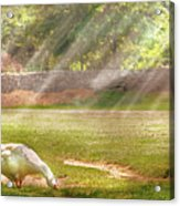 Farm - Geese -  Birds Of A Feather - Panorama Acrylic Print by Mike Savad