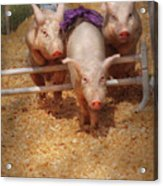 Farm - Pig - Getting Past Hurdles Acrylic Print by Mike Savad