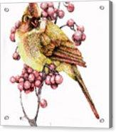Female Cardinal Acrylic Print by Preston Shupp