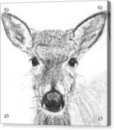 Female White-tailed Deer Acrylic Print by Marqueta Graham