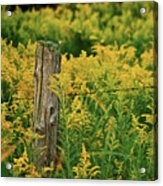 Fence Post7139 Acrylic Print by Michael Peychich
