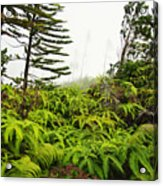 Fern And Norfolk II Acrylic Print by Ron Dahlquist - Printscapes