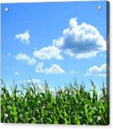 Field Of Corn In August Acrylic Print by Sandra Cunningham