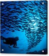 Fiji, Galapagos Islands Acrylic Print by Dave Fleetham - Printscapes
