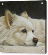 Finley Acrylic Print by Karen Coombes