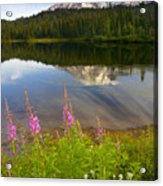 Fireweed Reflections Acrylic Print by Mike  Dawson