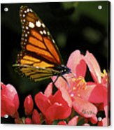 First Day Of Spring Acrylic Print by Elorian Landers