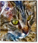 Fletcher Kitty Acrylic Print by Marilyn Sholin