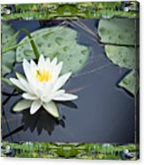Floating Ivory Acrylic Print by Bell And Todd