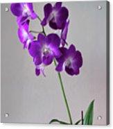 Floral Acrylic Print by Tom Prendergast