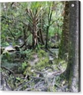 Florida Landscape - Lithia Springs Acrylic Print by Carol Groenen